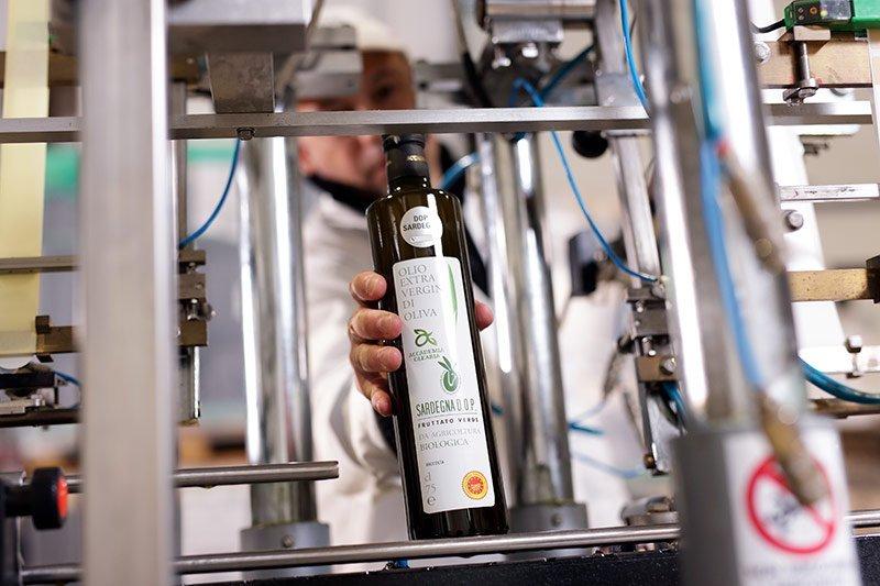 Produzione Accademia Olearia Alghero Sardegna